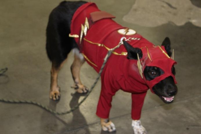 Comicpalooza 2017 - Flash Dog 4
